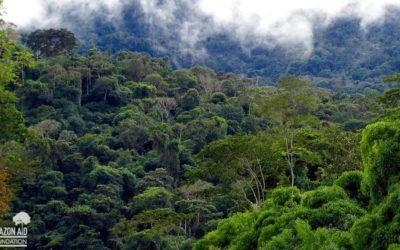 Amazon Inhales More Carbon Than It Emits