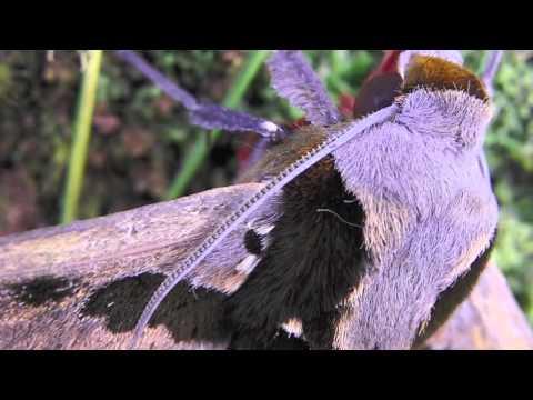 Moths of Wayqecha