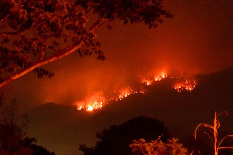 Amazon Wild Fires