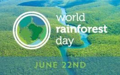 Celebrate World Rainforest Day On June 22
